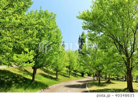 初夏の青空と新緑の公園 40348635