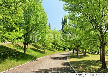 初夏の青空と新緑の公園 40348637
