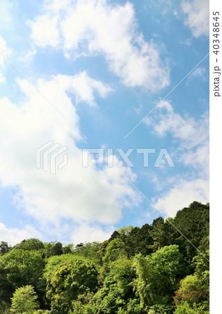 爽やかな青空と新緑の木々 40348645