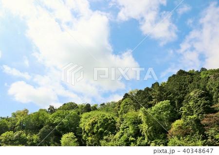 爽やかな青空と新緑の木々 40348647