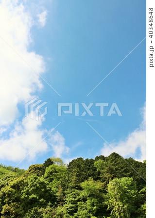 爽やかな青空と新緑の木々 40348648