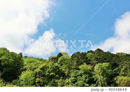 爽やかな青空と新緑の木々 40348649
