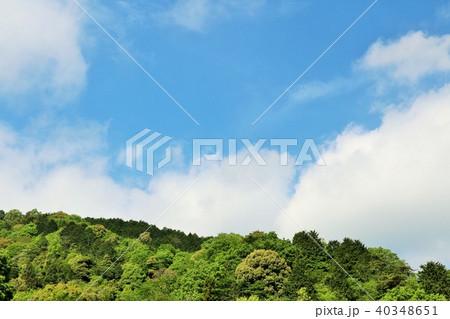 爽やかな青空と新緑の木々 40348651