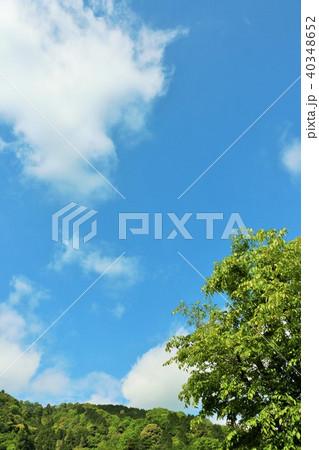 爽やかな青空と新緑の木々 40348652