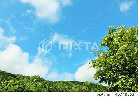 爽やかな青空と新緑の木々 40348653