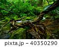 森 ジャングル ユツン川の写真 40350290