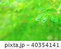 雨上がりのドウダンツツジの葉 40354141