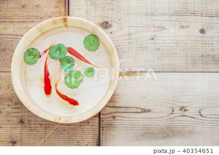 金魚 40354651