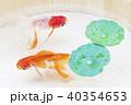 金魚 浮き草 淡水魚の写真 40354653
