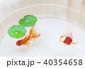 金魚 浮き草 淡水魚の写真 40354658