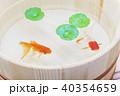 金魚 木桶 浮き草の写真 40354659