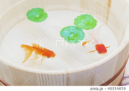 金魚 40354659