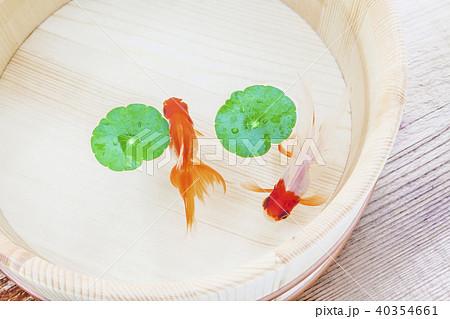 金魚 40354661