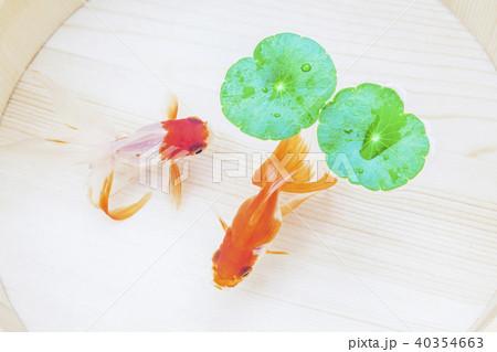 金魚 40354663