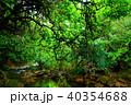 森 ジャングル ユツン川の写真 40354688