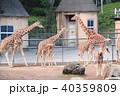アミメキリン キリン 動物の写真 40359809