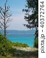 海 沖縄 慶良間諸島の写真 40372764