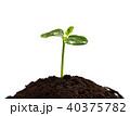 生態 エコロジー エコの写真 40375782