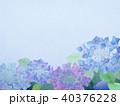 背景-紫陽花 40376228