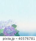 紫陽花 アジサイ 花のイラスト 40376781