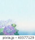 背景-紫陽花-カエル 40377129