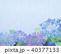 紫陽花 花 植物のイラスト 40377133