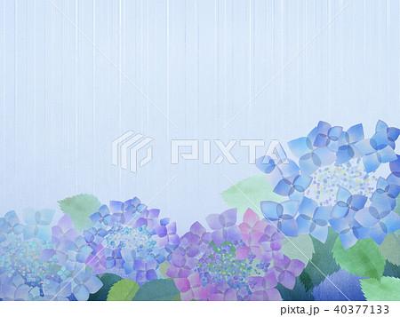 背景-紫陽花 40377133