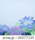 紫陽花 花 植物のイラスト 40377135