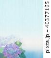 背景-紫陽花-カエル 40377165