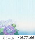 背景-紫陽花-カエル 40377166