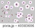 花 フローラル イソギンチャクのイラスト 40383606