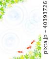 金魚 新緑 楓のイラスト 40393726