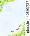 金魚 新緑 楓のイラスト 40393727