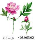 花 芽 蕾のイラスト 40396392