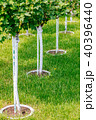 Young tree plantation up close 40396440