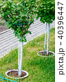 Young tree plantation up close 40396447