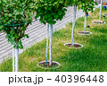 Young tree plantation up close 40396448