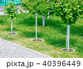 Young tree plantation up close 40396449
