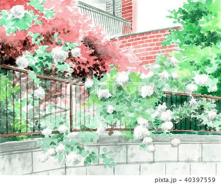 水彩で描いた赤レンガの建物と白バラの生垣 40397559