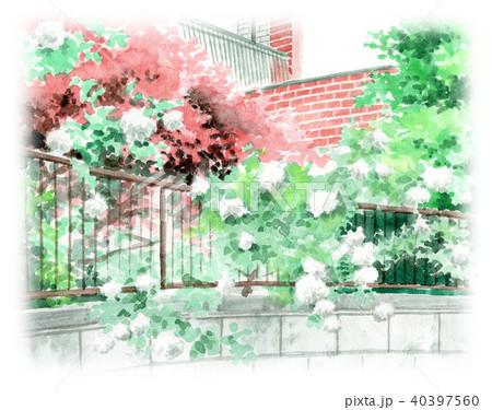 水彩で描いた赤レンガの建物と白バラの生垣 40397560