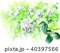 バラ 薔薇 花のイラスト 40397566