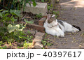 Cat sleeping on path in garden 40397617