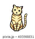 猫 アメショー アメリカンショートヘアのイラスト 40398831