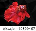 Polygon drawing of  betta illustation. 40399467