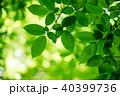 グリーン 緑 緑色の写真 40399736