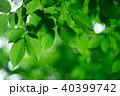 グリーン 緑 緑色の写真 40399742