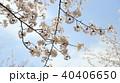 桜と空 40406650
