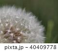 40409778