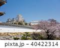 姫路城 桜 城の写真 40422314
