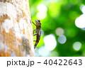 トカゲ 蜥蜴 爬虫類の写真 40422643